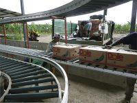 Transportadores para Banano- Plátano.