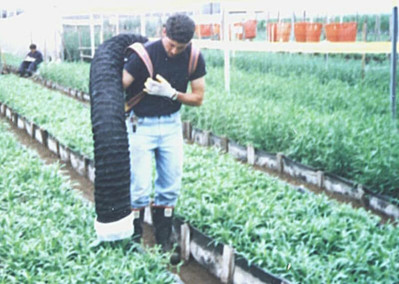 Aspiradora en cultivo de flores (ghypsophila)