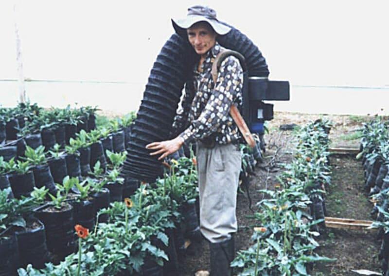 Control integrado de plagas en cultivo de gerberas.