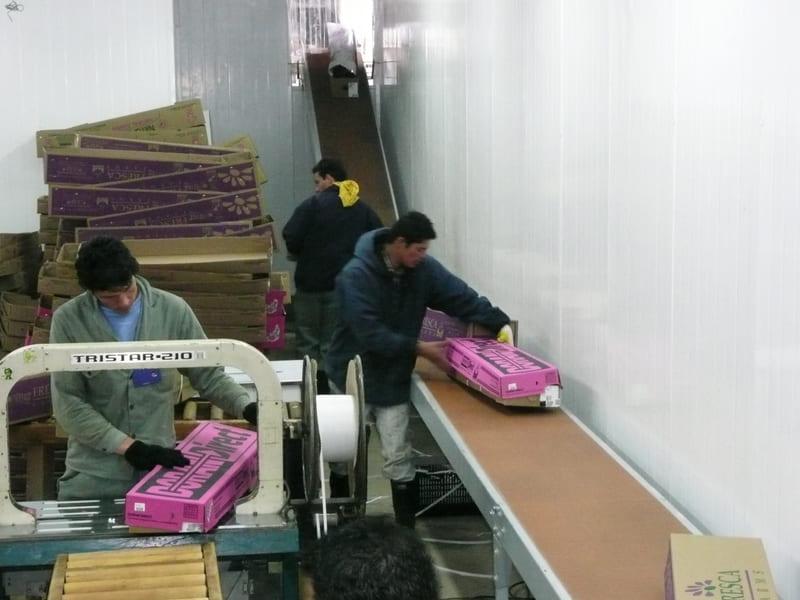 Transportadores en aérea de empaque cajas con flores.