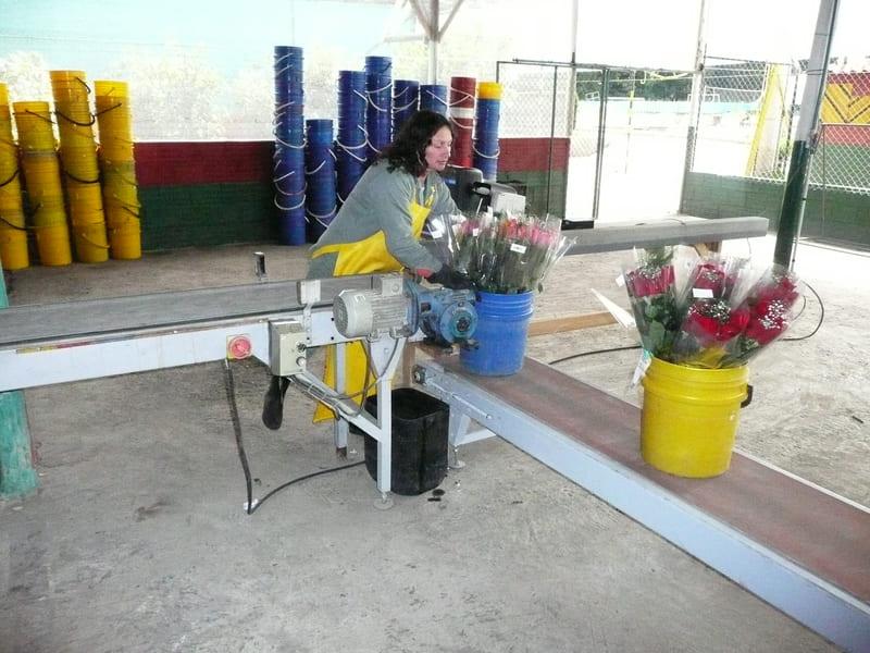 Movimiento de flor en Valdes clasificada y en ramos.