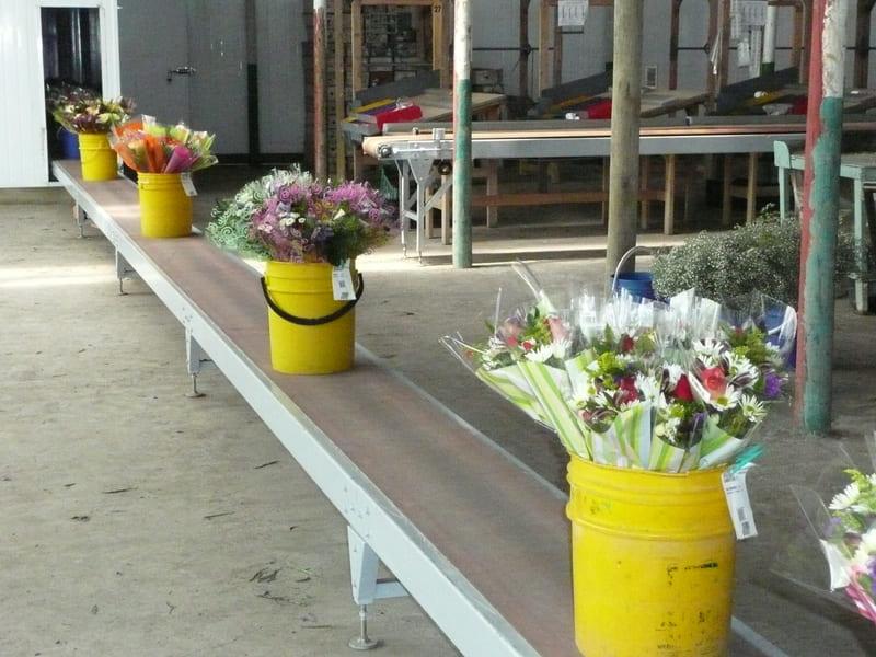 Bouquets a cuarto frío mediante transportador de banda continuo.