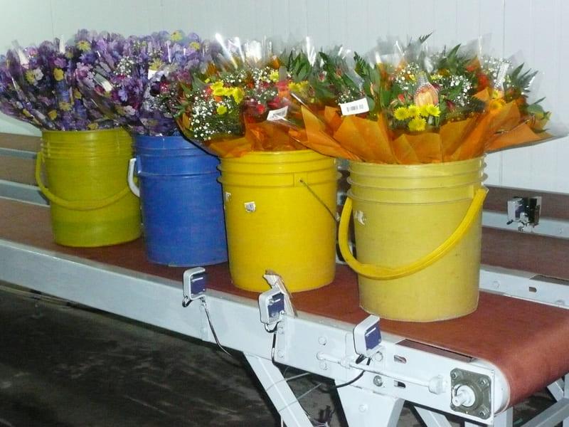 Proceso en cuarto frío de ramos de flor en Valdés.