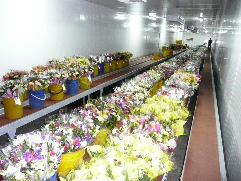Tratamiento de bouquets sobre bandas en cuarto frío.