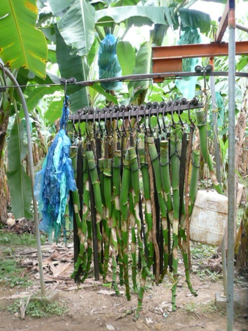 Transporte para picadora y compost en cultivo, vástagos y banano de rechazo.