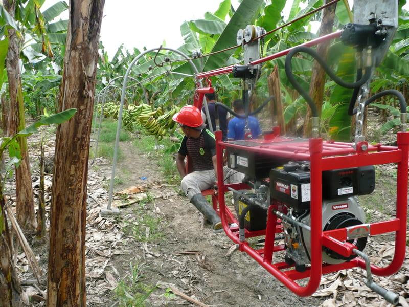 Halado de racimos de plátano (200 unidades) mediante tractor aéreo.