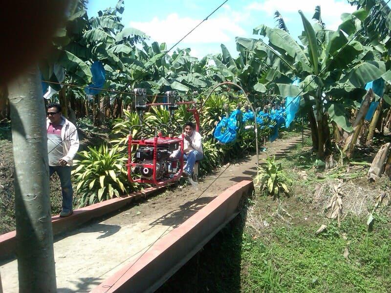 Halado de 200 racimos de banano, con tractor aéreo, hidráulico (Analpes).