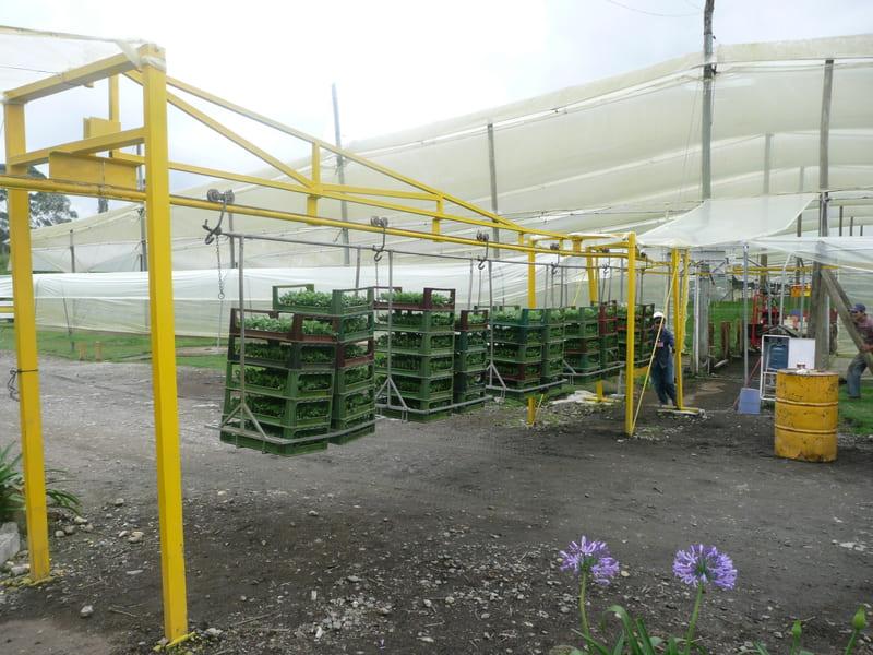 Transporte en cable vía de esquejes desde plantas madres a cultivo.