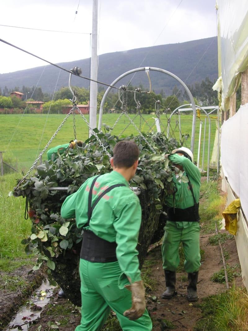 Transporte de masivos (desecho de flores a compost).