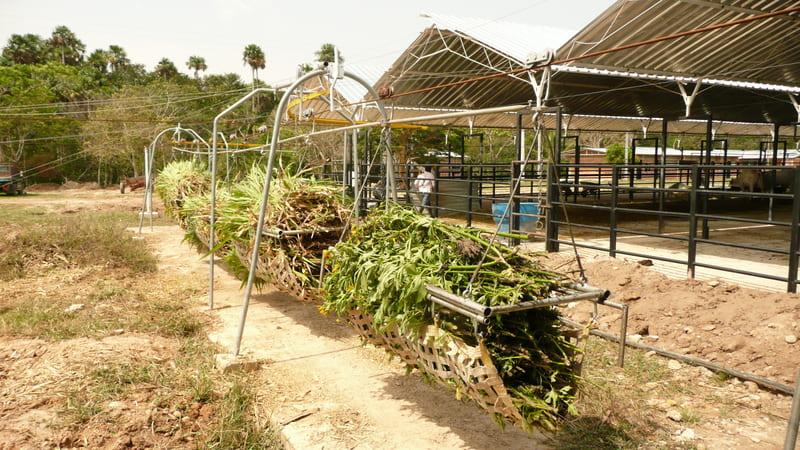 Distribución por cable vía aérea de picado en patio de alimentos