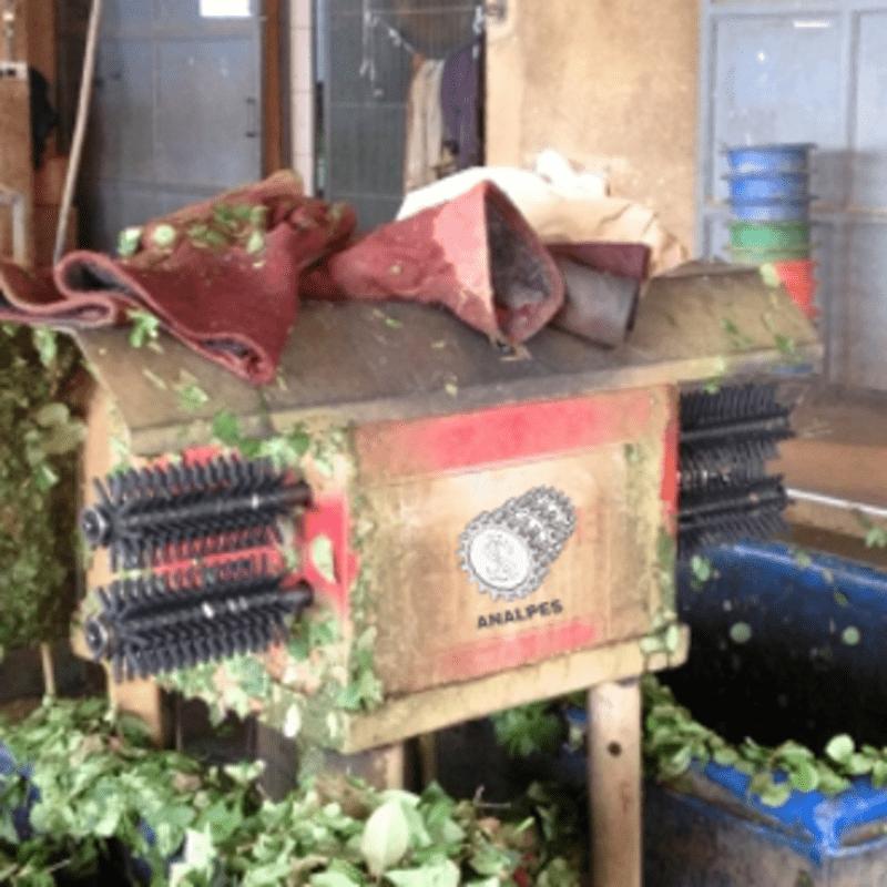 Maquina desfoliadora de ramos de doble husillo.