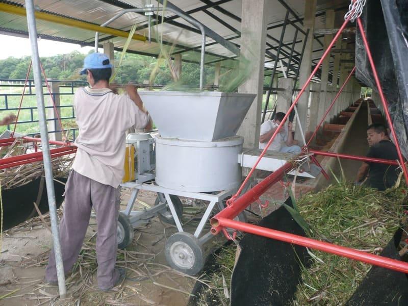 Picado de pasto de corte en ceba intensiva o semi – intensiva.