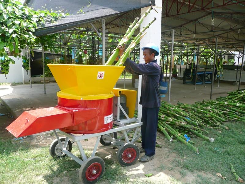Proceso de picado triturado de vástago y desechos en plantación de banano/plátano., para Procesos de Compost en Cultivo.