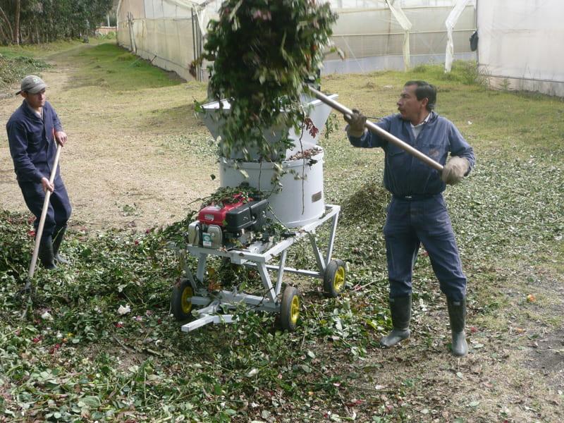 Proceso de picado con máquina de 12 HP, con motor a gasolina.