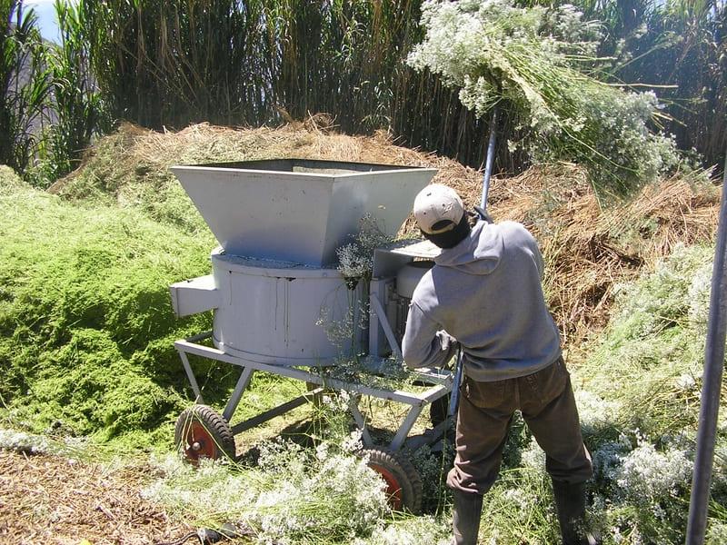Proceso con desechos orgánicos de flores- Cultivo de gypsophila – ( Ibarra – ecuador).