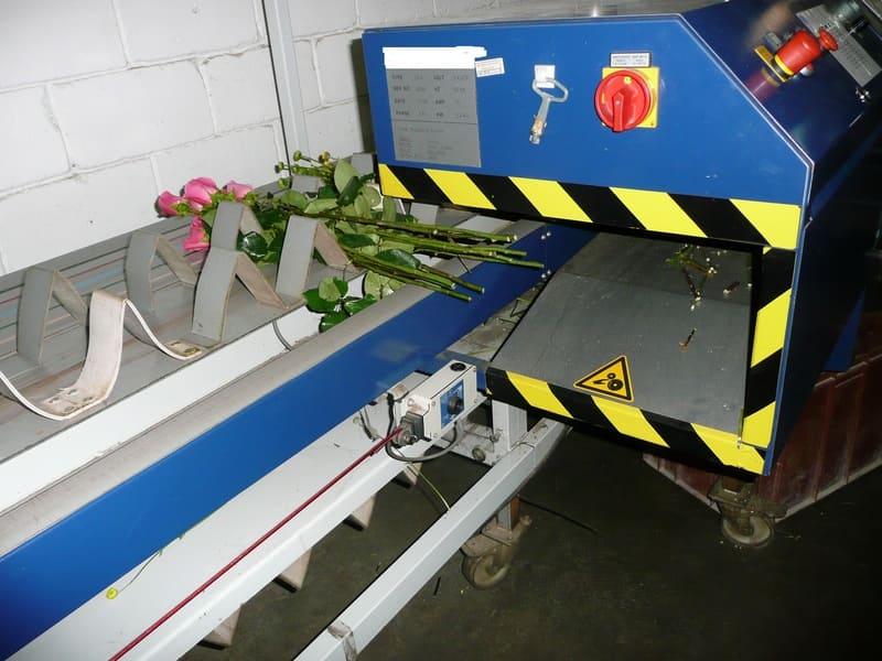 Proceso de entrada corte de ramos - Rosas.