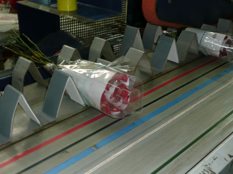 Proceso de corte con banda plana – banda pisadora automática.