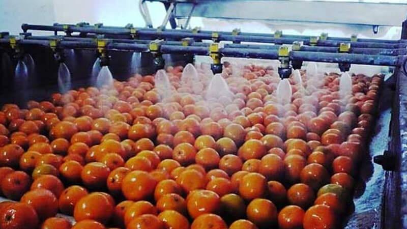 Lavado, Desinfección y Recubrimiento de Frutas en Empacadoras.